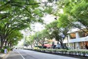 表参道のケヤキ並木