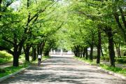 桜通り広場公園