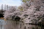 善福寺公園