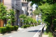 玉川上水(風の散歩道)