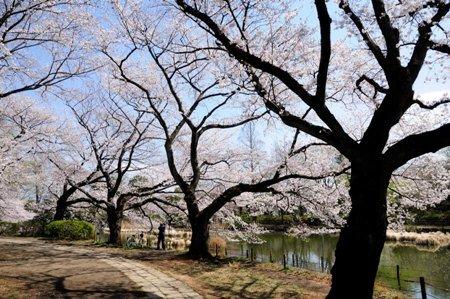 善福寺公園2013